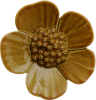 Ribbonwood Flower