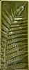 Wall Oblong Silver Fern